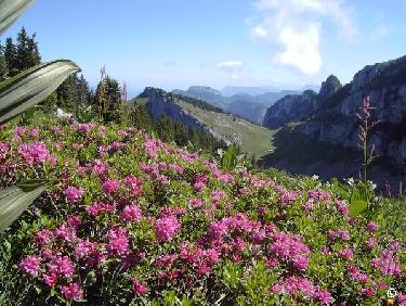 Col et Rhododendrons.